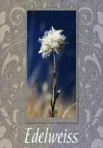 Купить флизелиновые обои коллекция Edelweiss